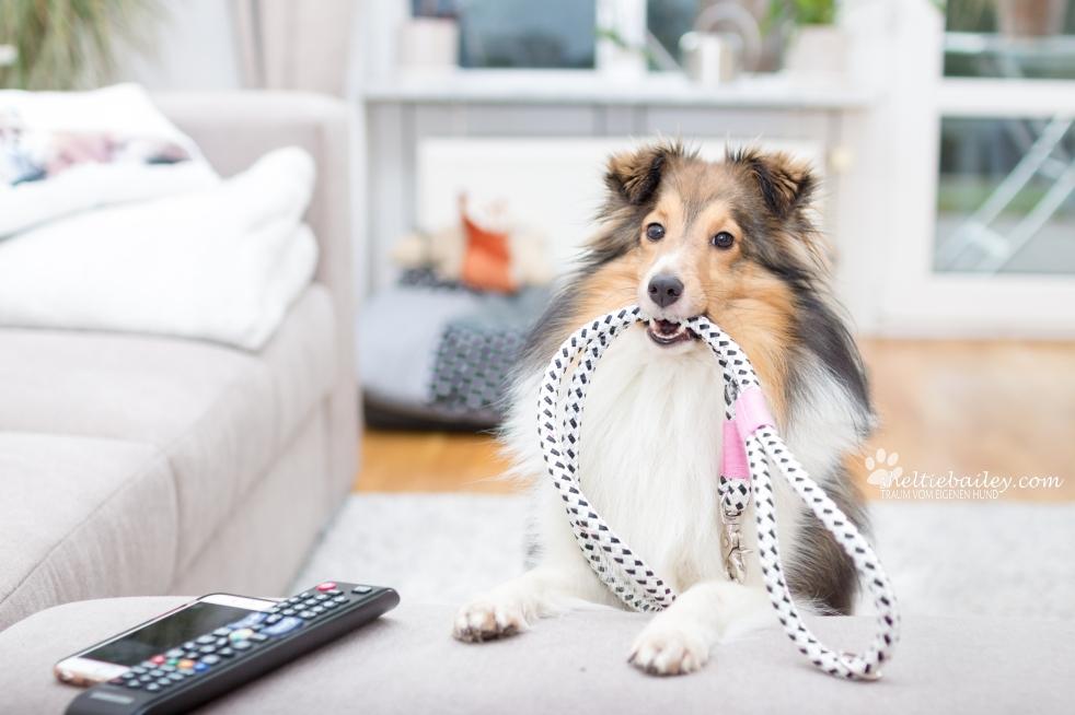 kreative Fotos mit Hund