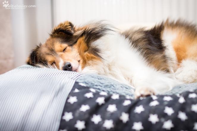 schlafenden Hund fotografieren