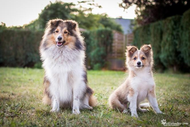 Hunde im Garten fotografieren