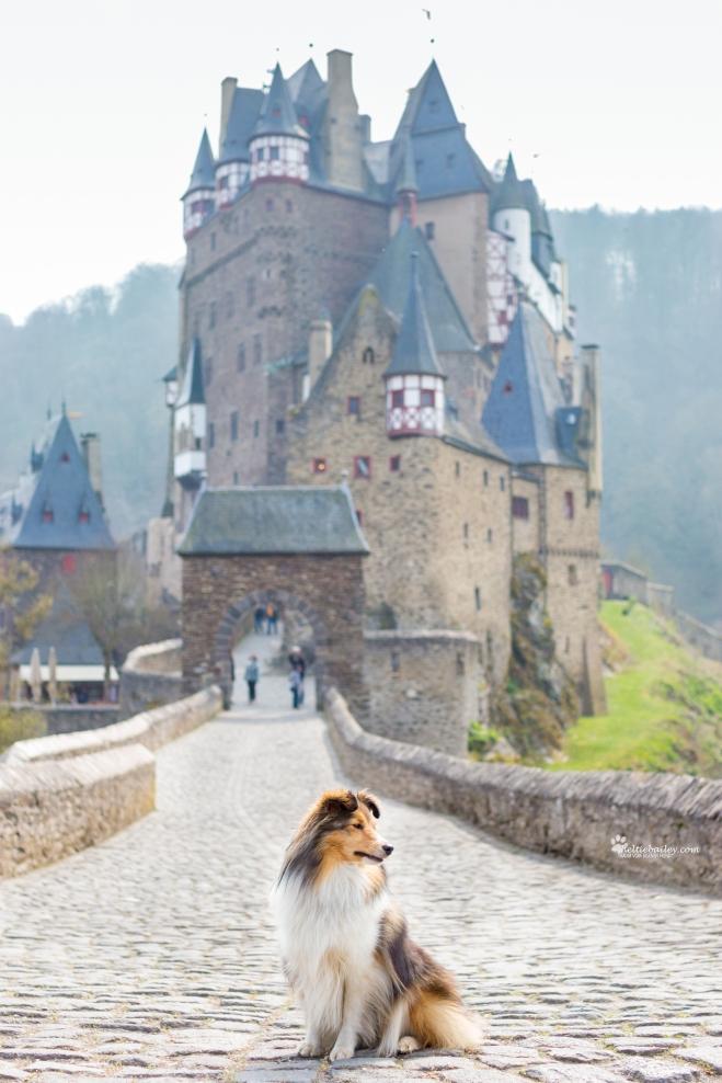 Burg Eltz Wandertour mit Hund