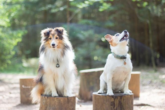 Hundeblogger im Wald