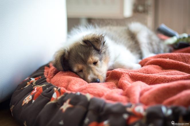 Tipps wie der Hund allein bleibt