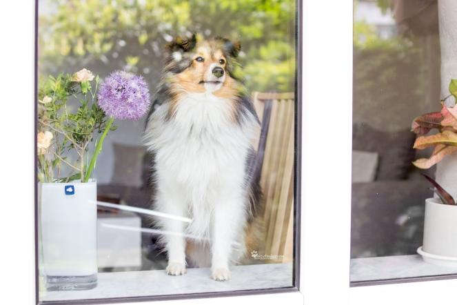 Hund vermisst Herrchen