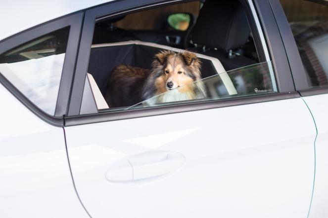 wie fährt Hund sicher Auto