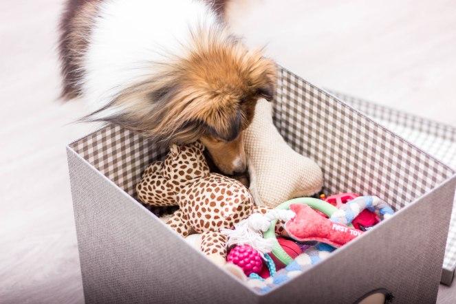 Spielkiste für Hunde