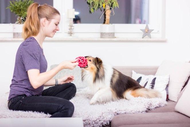 richtig Spielen mit seinem Hund