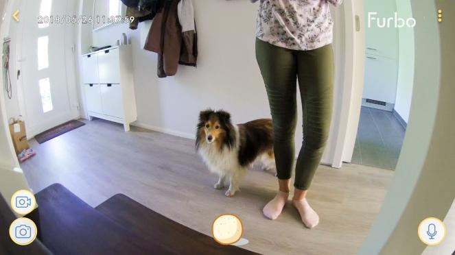 Hund mit Kamera beobachten