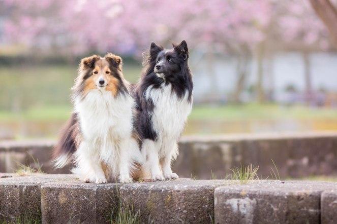 Kischblütenshooting Hund
